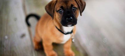 cute-dog-pup