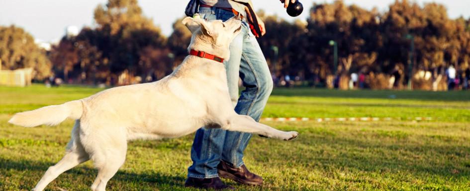 dog-playing2