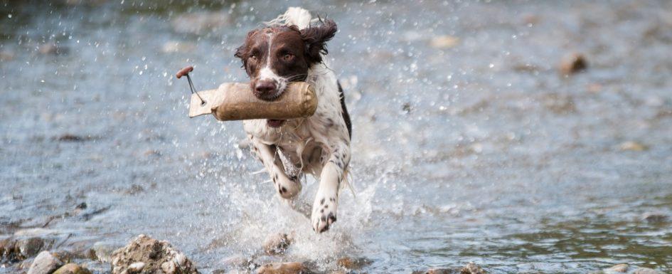 dog-1212400_1920